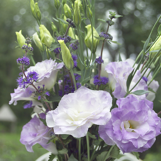 Lisianthus - Click Image to Close